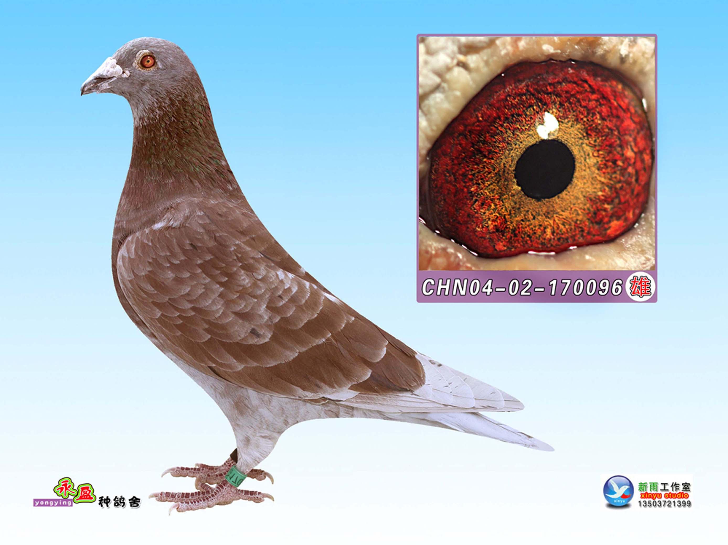 信鸽自动门电路图