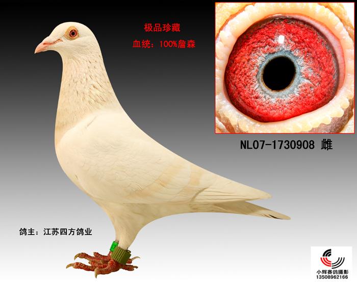 教学鸽鸟类蜜蜂图示鸟服饰700_560上海小鸽子动物怎么样图片