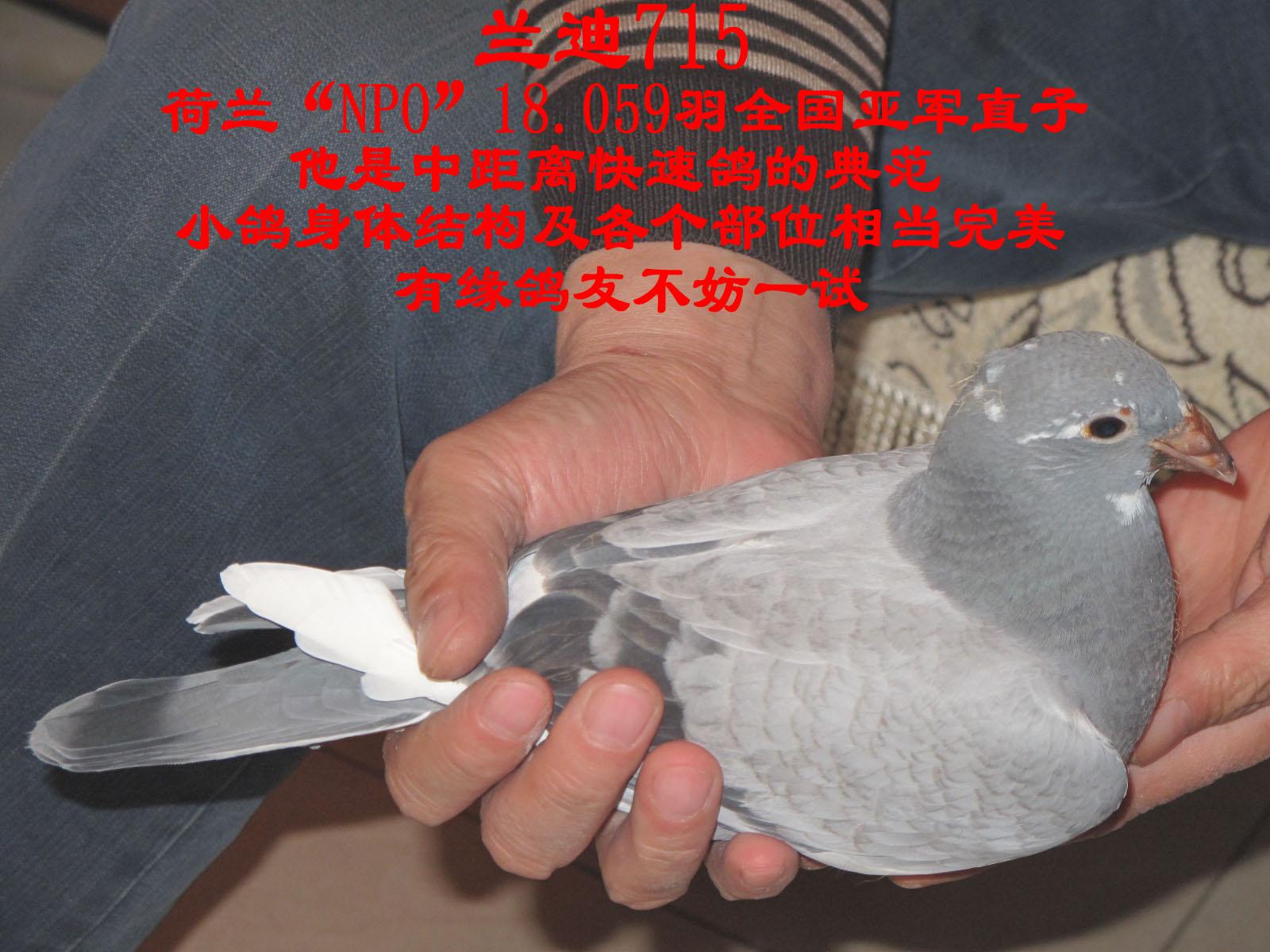鸽子每个部位结构图