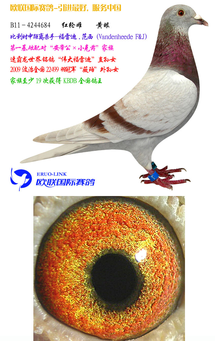 北京福鸽喇叭接线图