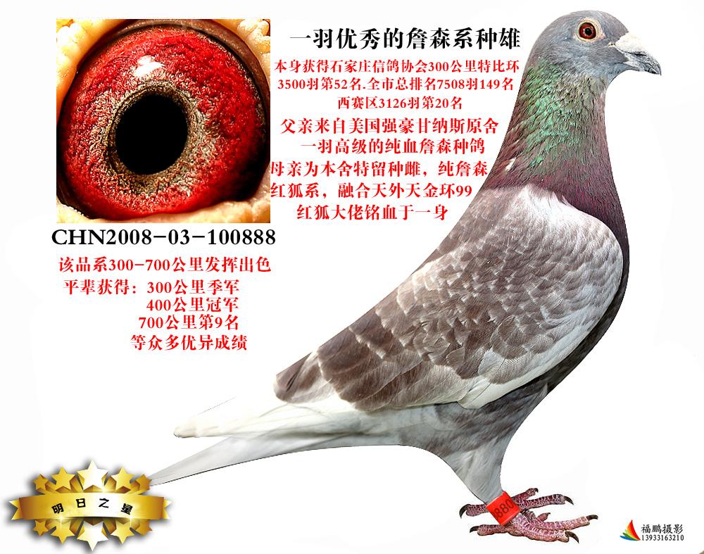 信鸽在线拍卖平台 - 中国信鸽信息网
