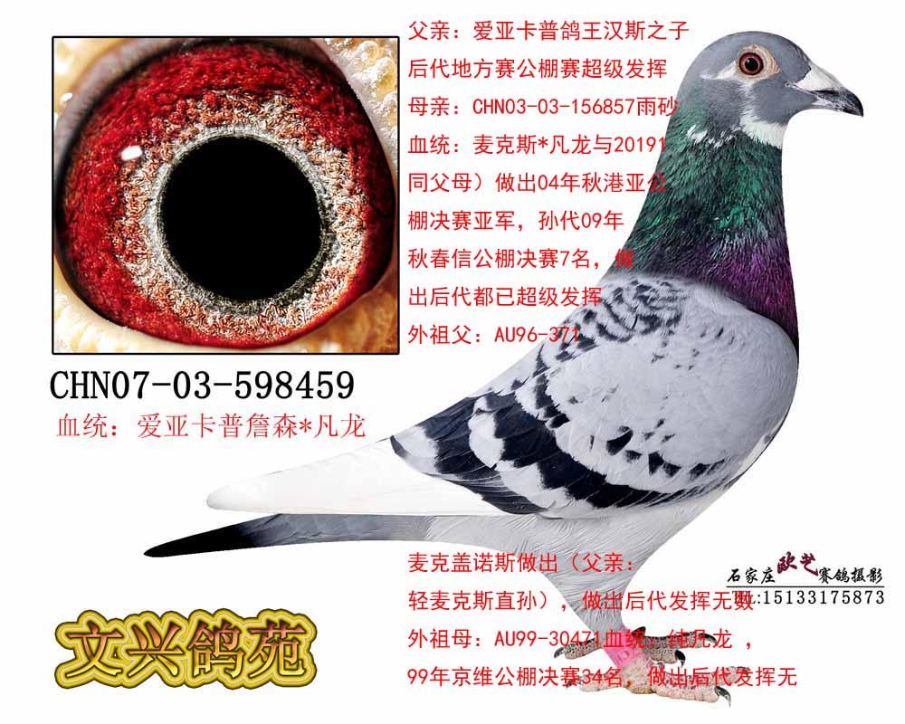 信鸽眼睛结构图