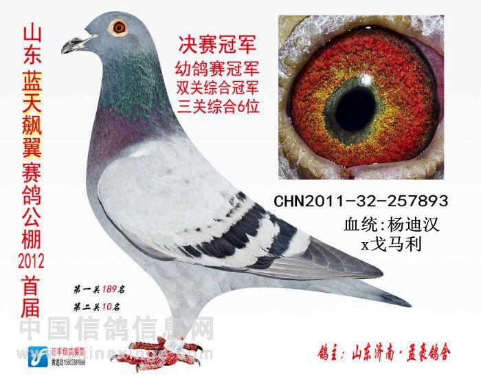 精品种雌 保证金级 拍卖 -信鸽在线拍卖平台 - 中国信鸽信息网