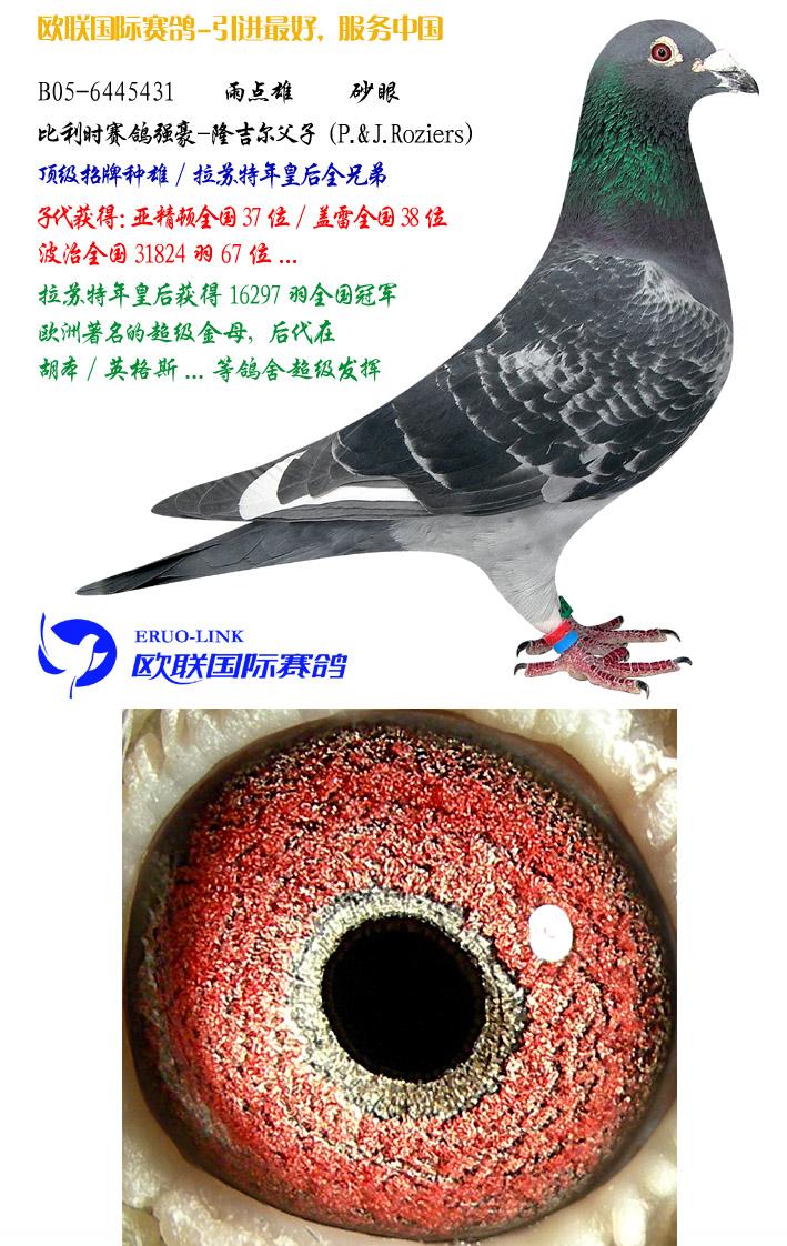 动物 鸽 鸽子 鸟 鸟类 709_1122 竖版 竖屏
