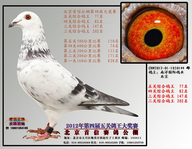 动物 鸽 鸽子 鸟 鸟类 800_622