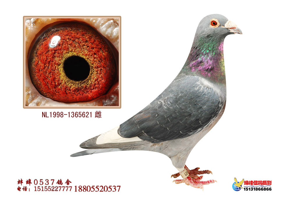 杨阿腾超级鸟