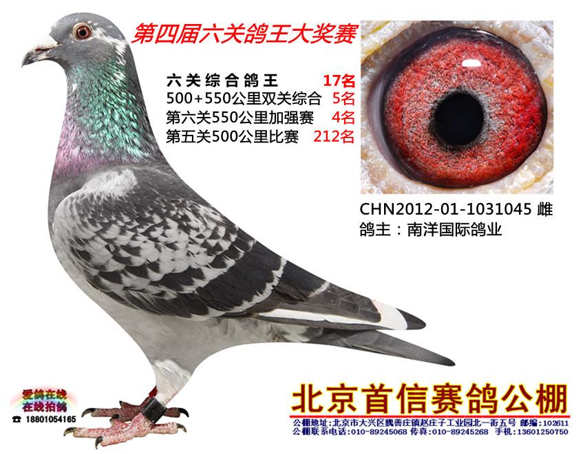动物 鸽 鸽子 教学图示 鸟 鸟类 850_660