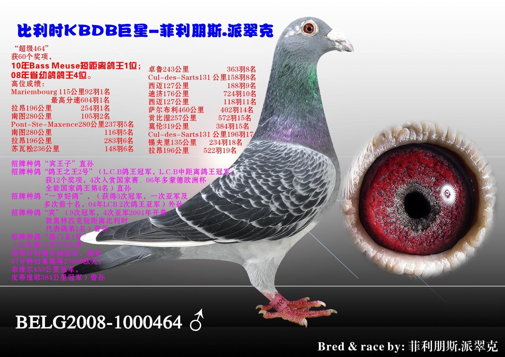 动物 鸽 鸽子 教学图示 鸟 鸟类 1753_1240