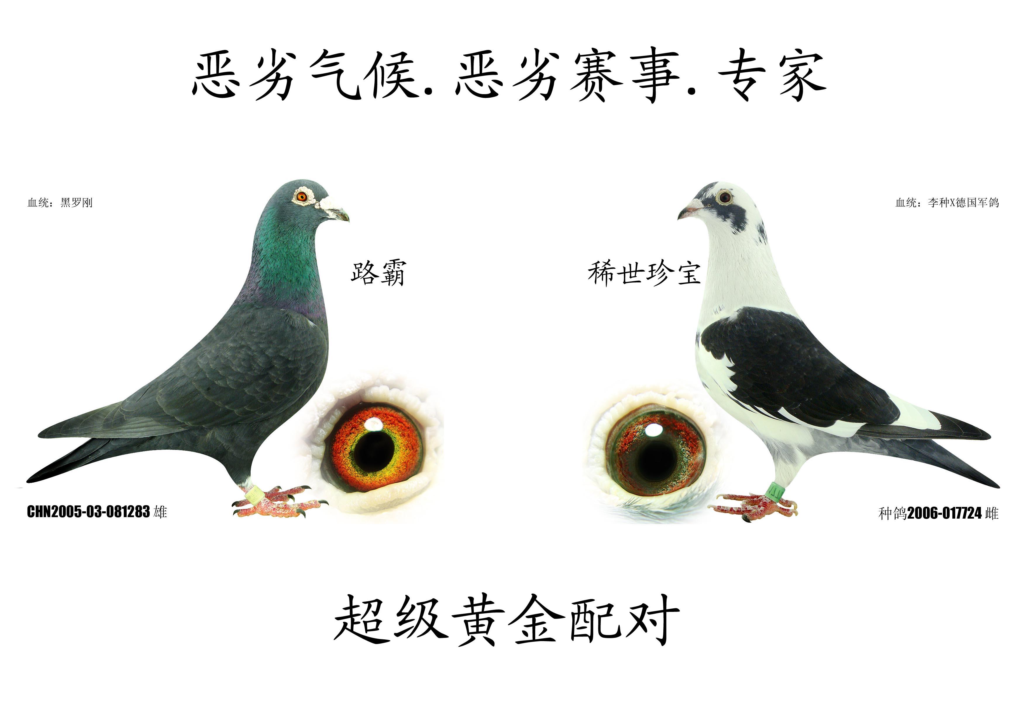 眼睛结构图内容眼睛结构图版面设计