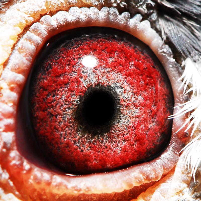 脚眼睛是哪个部位图解