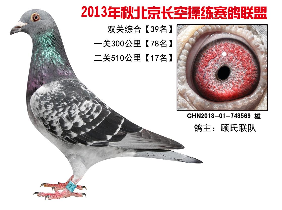 北京/北京长空操练赛鸽联盟