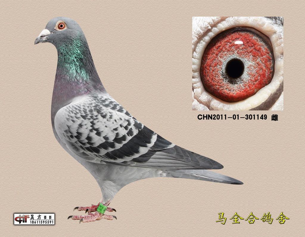 北京/北京博天赛鸽俱乐部