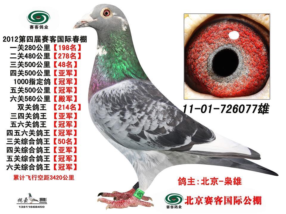 鸽眼部位图解