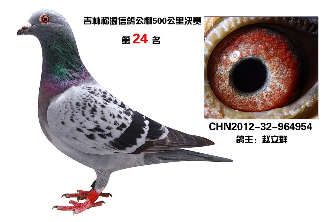 青岛松源产品图片