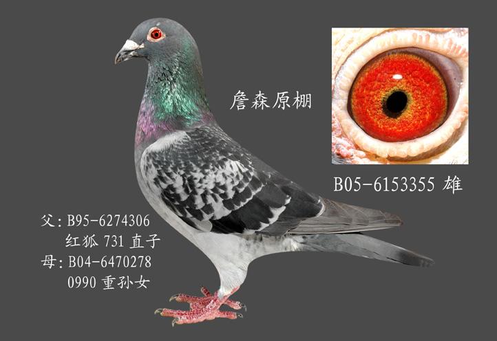 詹森红狐731直孙