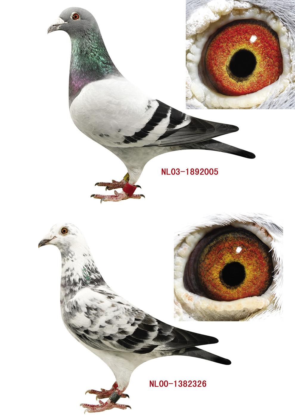 动物影子配对图形