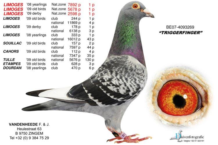 速霸龙 三圣母 欧联国际赛鸽图片