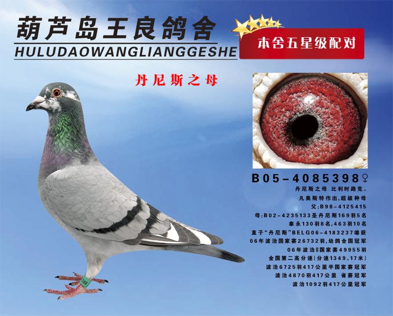 09春葫芦岛火车头信鸽协会500公里580元特比 季军  09年葫芦岛市信鸽
