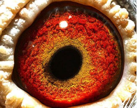 龙眼睛-速霸龙利蒙治唯一父女近亲直子 霸王龙 号