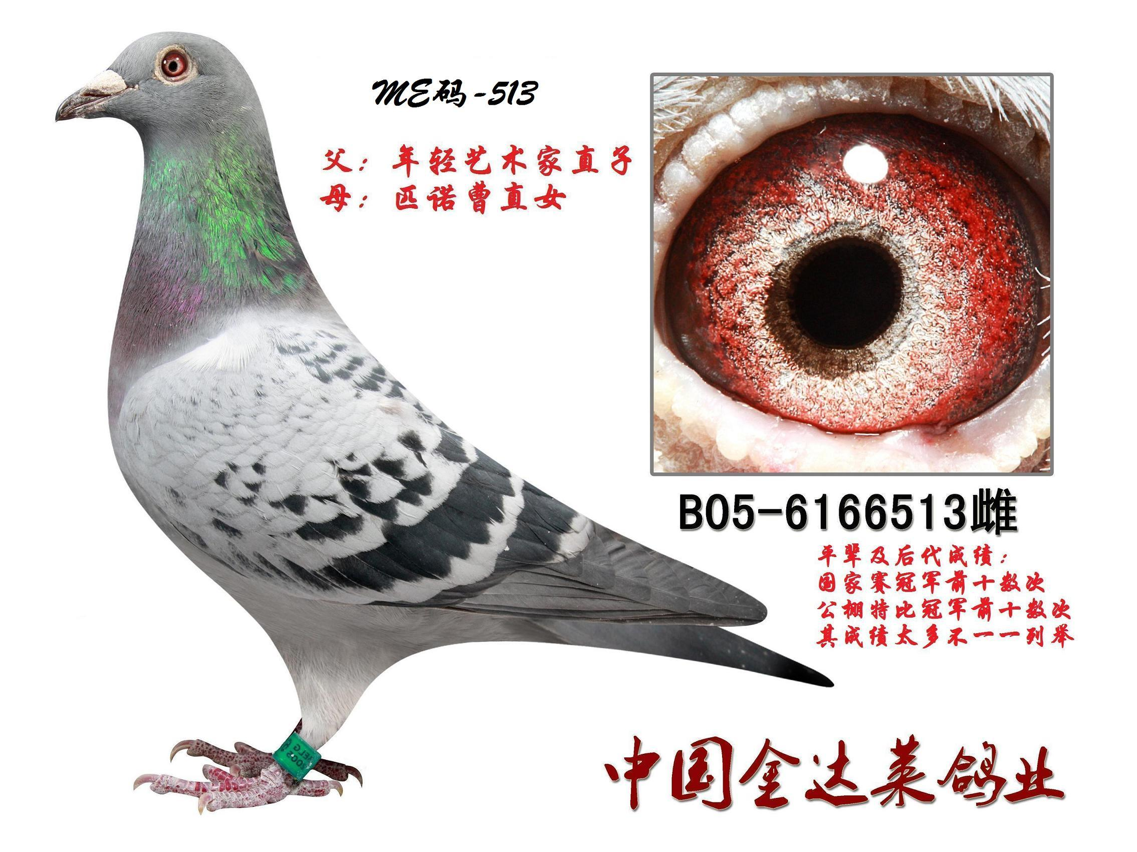 胡本513 廊坊信鸽传媒
