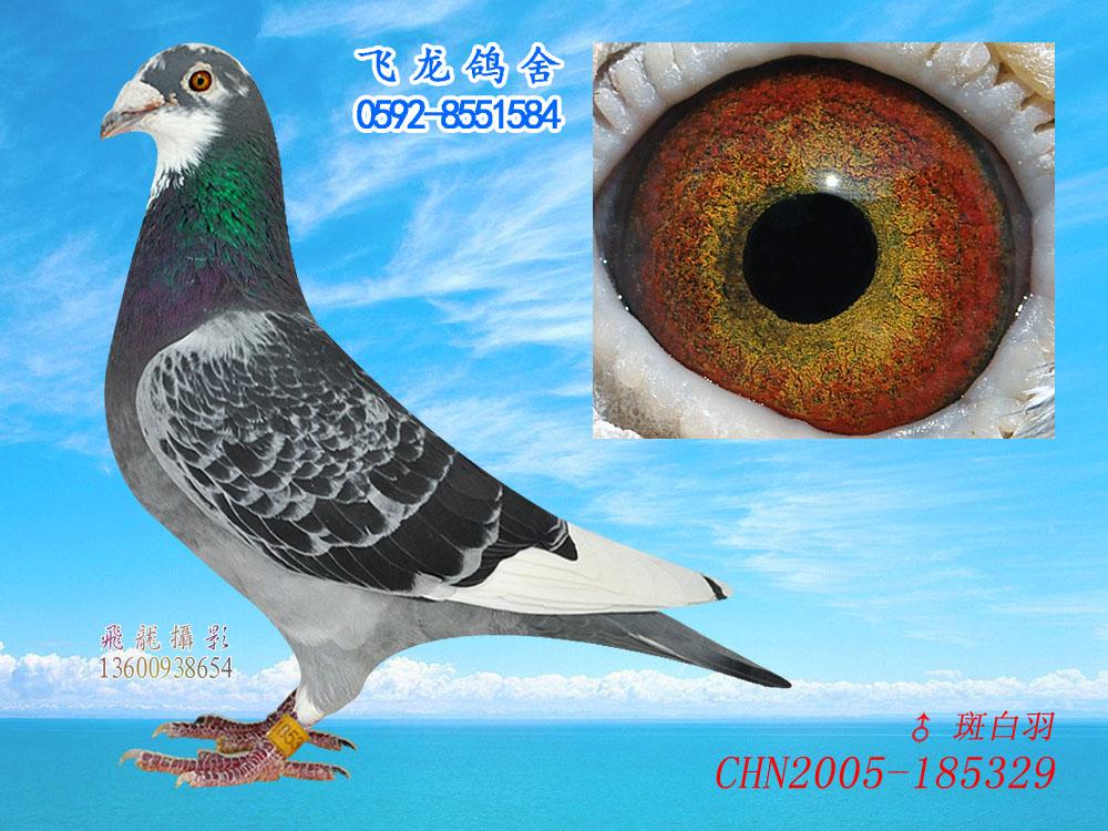 百科鸽海豚鸽子图示鸟教学1000_750动物叶百度鸟类图片