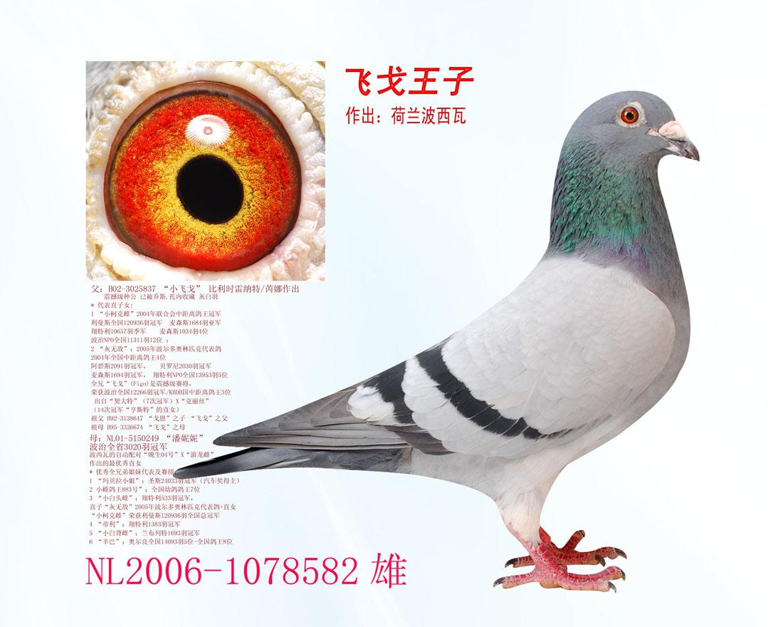 飞戈王子 全友国际铭鸽
