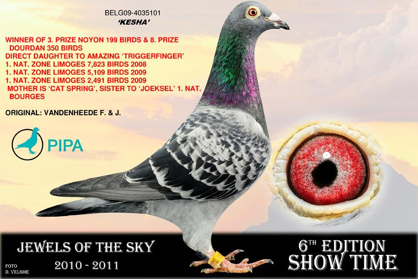 速霸龙信鸽图片鸽子-欧洲拍卖照片-速霸龙 凯莎雌 欧联国际赛鸽图片
