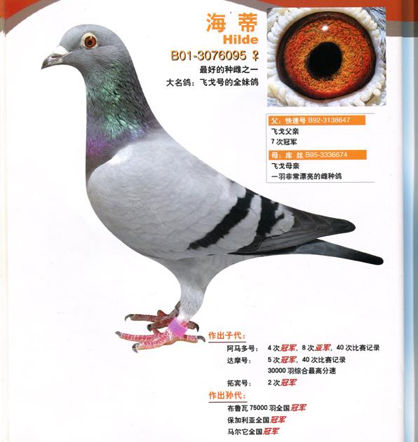 飞戈940 宁夏刘光军