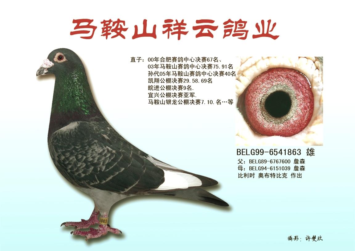 奥布詹森_安徽禄祺鸽苑_ ag188.com爱鸽商城_中国信鸽图片