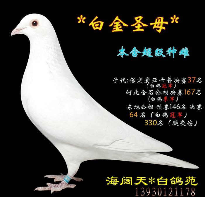海阔天*白金圣母* 与白将军为金钻组合_海阔天·白鸽