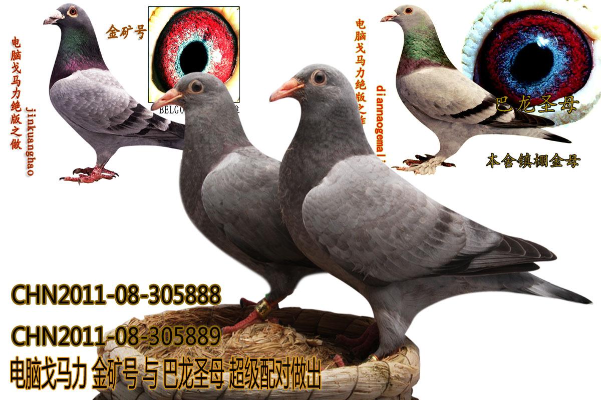 大象动物鸽鸽子鸟手工1200_800鸟类者纸壁纸头图片
