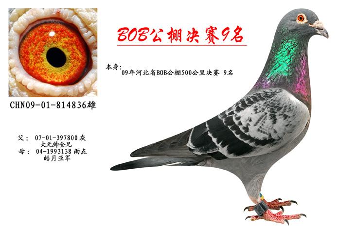 BOB公棚v儿童9名_北京国顺家俱鸽舍_ag188儿童家具颜色的床图片