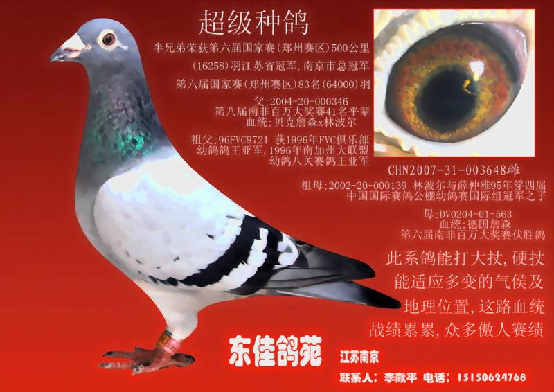 超级种鸽 6