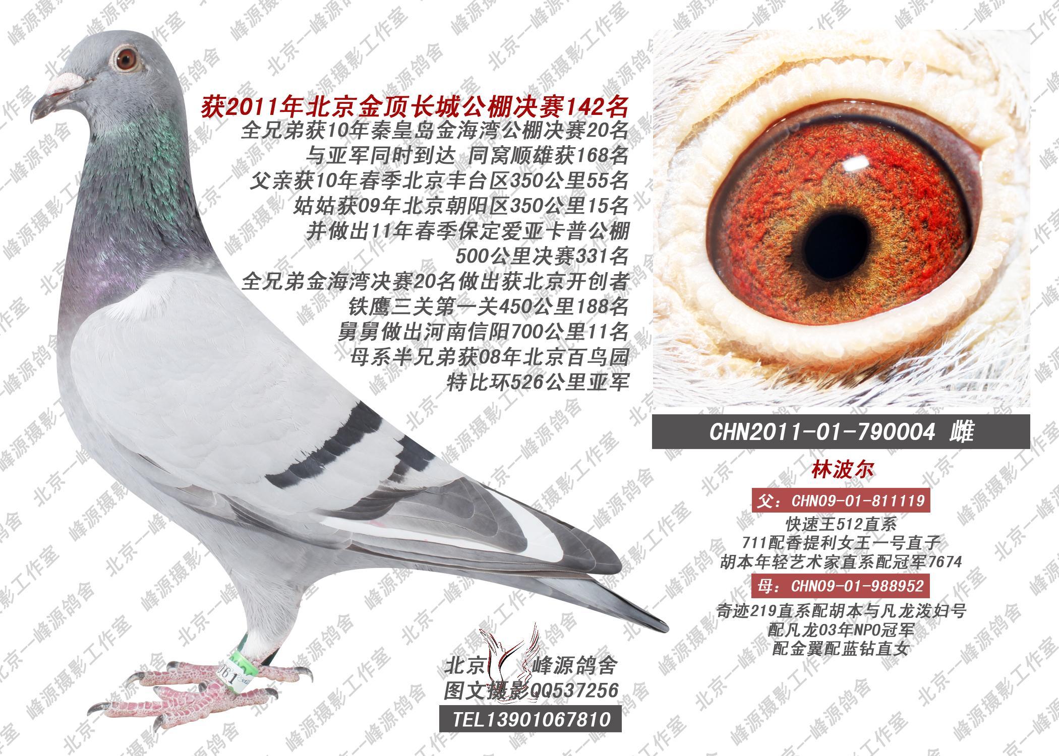 相关图片 信鸽特征 鸽名: 获2011年金顶长城公棚决赛142名 作出