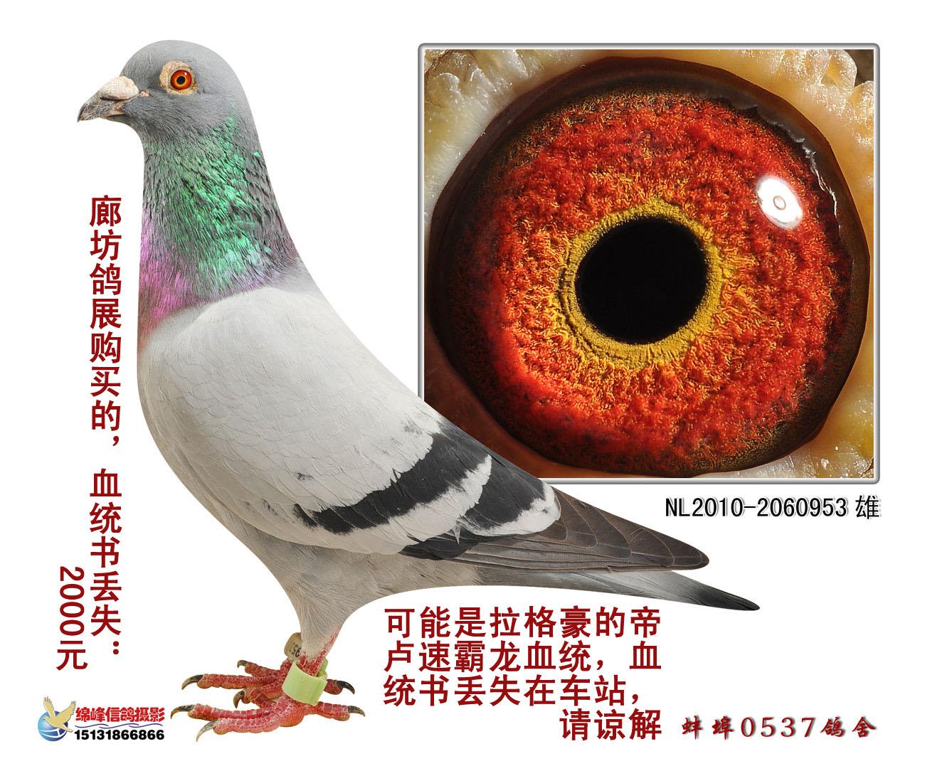 外国木制鸽舍图片大全