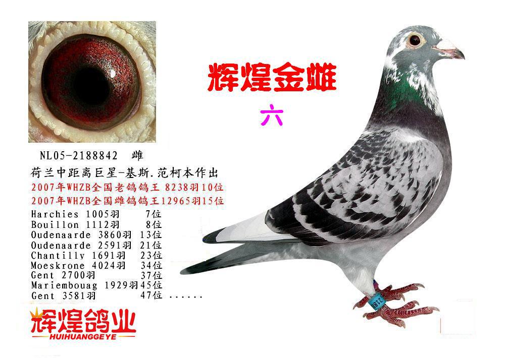 性别:雌羽色:花头雨点白条眼砂:砂眼目录:人气:2908次NL05-图片