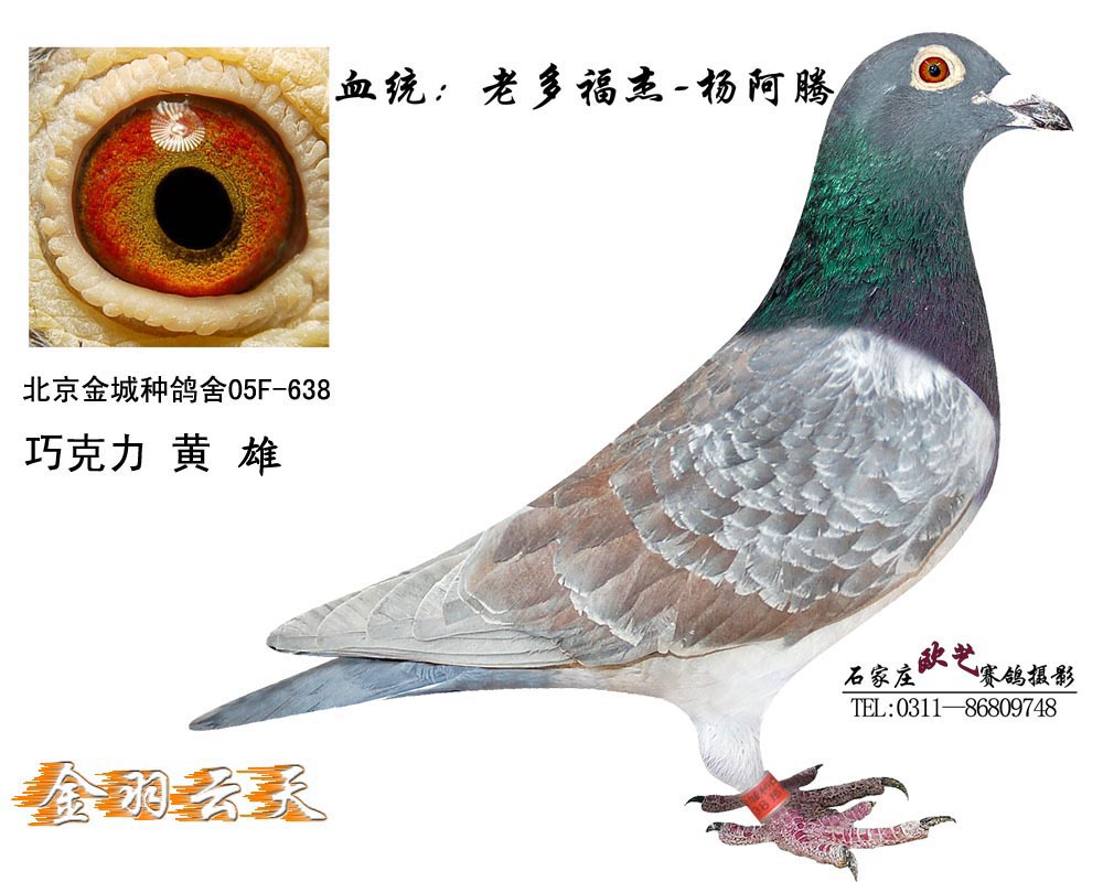 老多福杰杨阿腾直子638