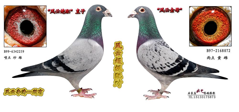 信鸽眼沙结构图片