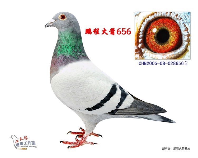 外祖母:北京96-042000德国斯塔尔系x美国克拉克威龙
