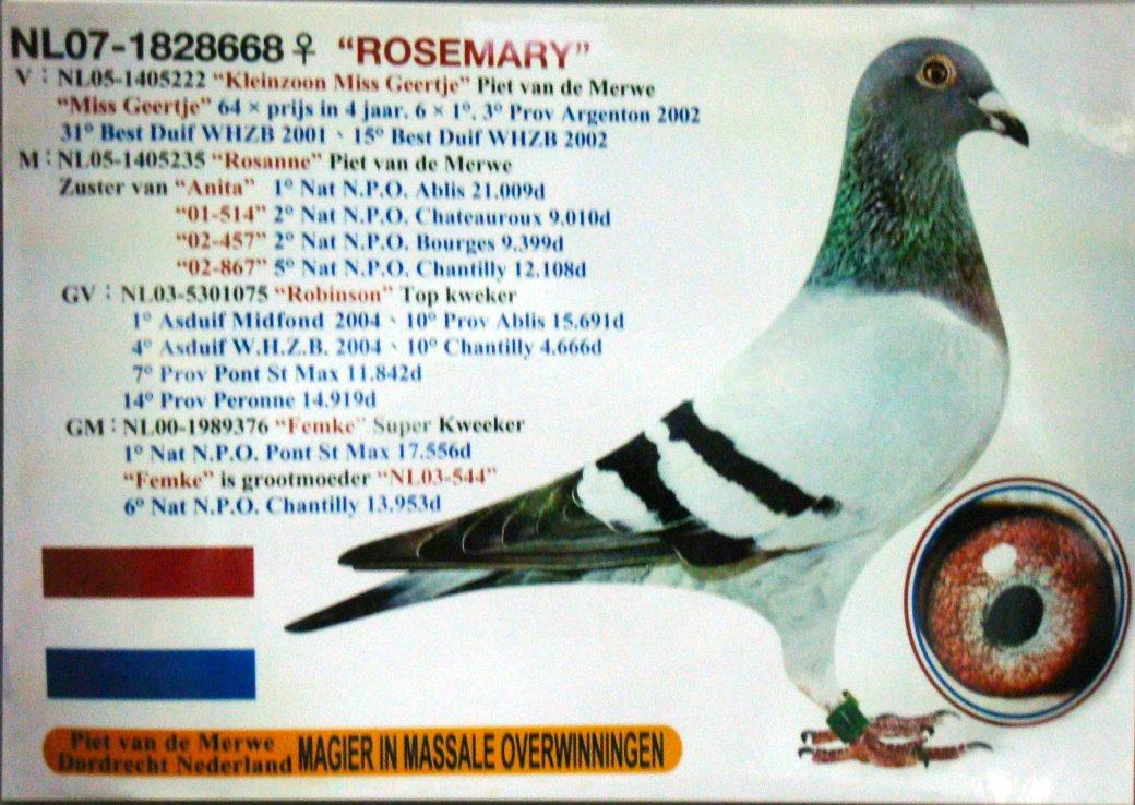 668色情网_比利时鸽王668