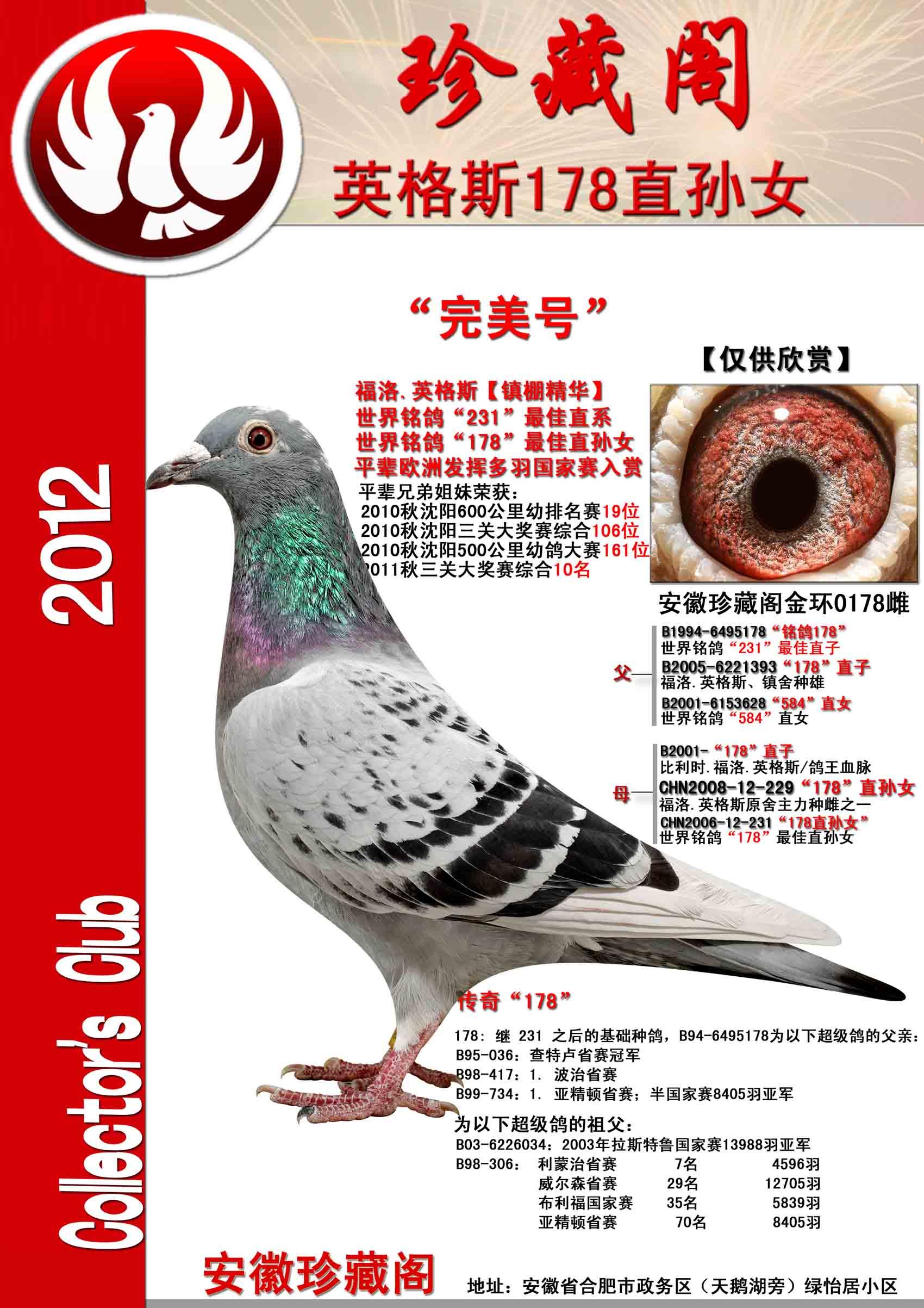 动物 鸽 鸽子 教学图示 鸟 鸟类 1700_2405 竖版 竖屏