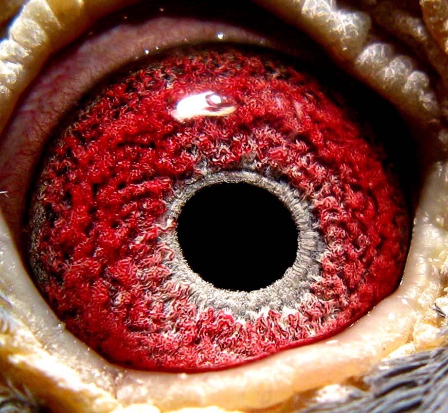 眼睛闪电特效素材