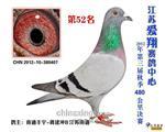 2012年秋徐州爱翔赛鸽中心决赛52名