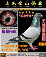 """鸽王冠军之姨(胡本X""""老白眼"""""""