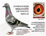 北京18区联翔28394羽冠军