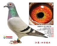 【北西南】三关鸽王总冠军【已转让】