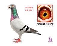 CHN08-01-175357雄