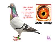 CHN11-01-992988雄