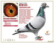 传奇将军500回血鸽展售