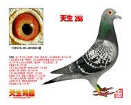 CHN10-02-003268